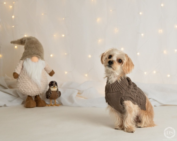 PetValu - Holiday Photos 2018